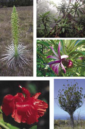 Photographs from *Endangered Plants and Threatened Ecosystems on the Island  of Hawaii*